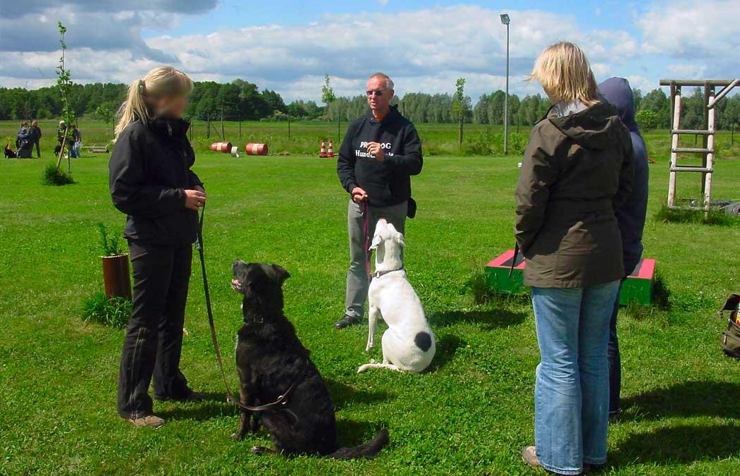 Kompetente Ausbildung BHV-zertifizierte Hundetrainer.