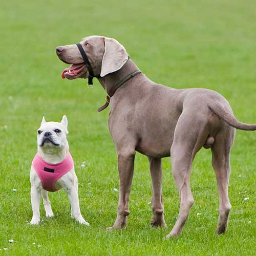 Kommunikation Teil 1: Hund-Hund