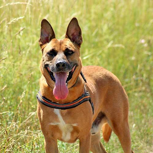 Praxisseminar: Der aufgeregte, unkonzentrierte Hund am 25.04.2020